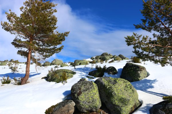 TOUR IN SERRA DA ESTRELA (Price upon request)